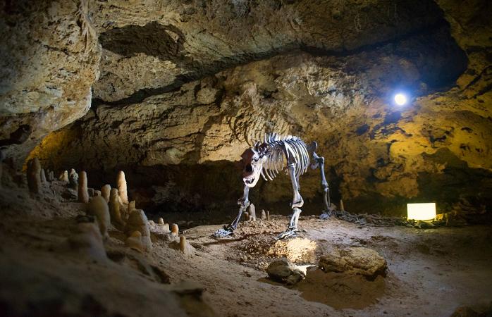 Skelett eines Höhlenbären in der Teufelshöhle in Pottenstein