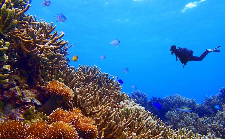 Unterwasser-Wunderwelten: Tauchen in Asien