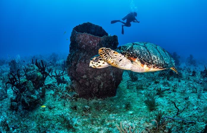 Lust, mit Schildkröten zu schwimmen? Dann such dir das richtige Reiseziel aus