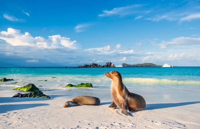 Die Seelöwen der Galapagosinseln